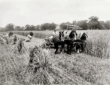 Agriculture 19th century